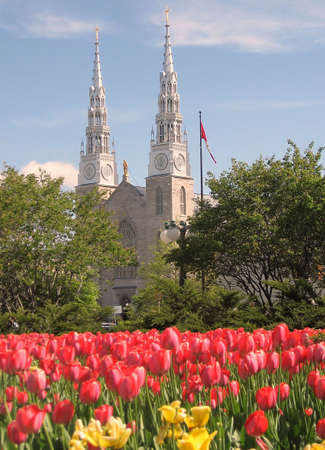 Tulips and Notre Dame Basilica in Ottawa, Canada