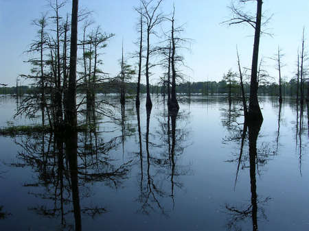 Reflection of cypress tree roots in Black Bayou evening near Mississippi USA