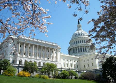 Cherry Blossoms near Capitol, in Washington DC, USA Stock Photo