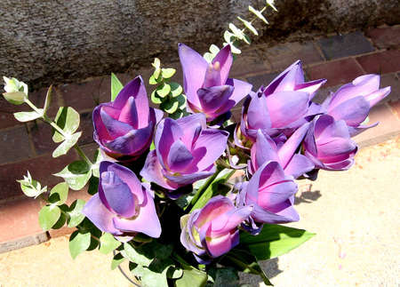 Bouquet of Violet Curcuma in a vase in Or Yehuda, Israel  photo