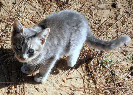 Young gray cat in Ramat Gan Park, Israel Stok Fotoğraf