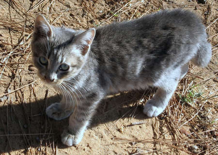 Portrait of a gray cat in Ramat Gan Park, Israel Stok Fotoğraf