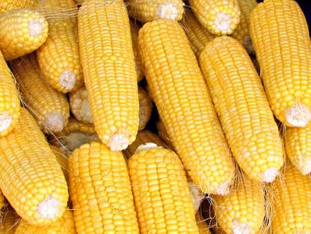 Fresh corn cobs on bazaar in Tel Aviv, Israel Stock fotó - 13806638