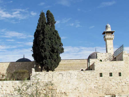 Cypress on the roof  of Al-Aqsa Mosque in the old city of Jerusalem                   Imagens
