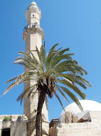 etymology: Palm tree in front of Great Mosque Muhamidiya Mosque in old city Jaffa, Israel