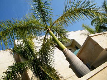 cycadaceae: Exotic tree in Neve Monosson near Or Yehuda, Israel
