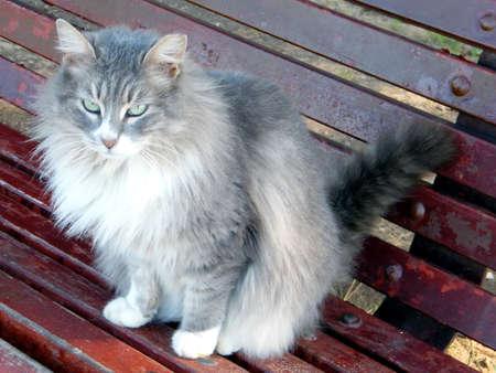 The gray cat on bench in Ramat Gan Park, Israel