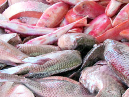 Different types of fresh fish on bazaar in Tel Aviv, Israel Stock fotó - 34221023
