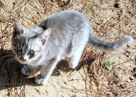 Young gray cat in Ramat Gan Park, Israel Banco de Imagens
