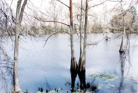 bayou: Trees on a Black Bayou near Mississipp, in 2002i, USA Stock Photo