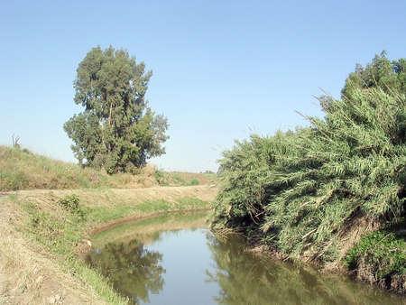 webfoot: The  bulrush on Ayalon River near Or Yehuda in Israel