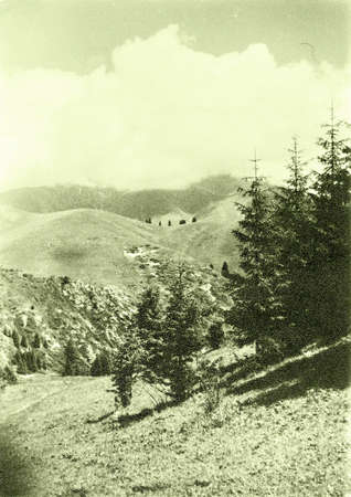issyk kul: Old photo: the spruce trees in Tyan-Shan mountains near Issyk Kul lake, in 1965, Kyrgyzstan