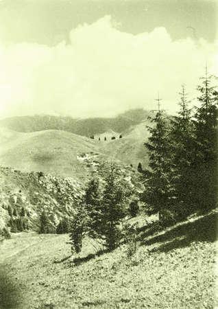 issyk kul: Old photo: the spruce trees in Tyan-Shan mountains near Issyk Kul lake, in 1965, Kyrgyzstan