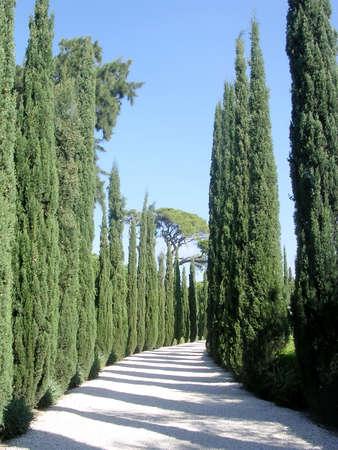 bahai: The cypress in Bahai garden near Akko, Israel