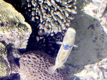 oceanarium: Big Fish sunny day in Eilat Oceanarium in Israel