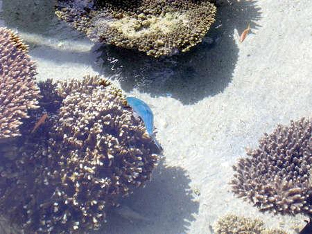 홍해, 이스라엘의 해 안에있는 에일랏 해양 수족관의 산호초 스톡 콘텐츠