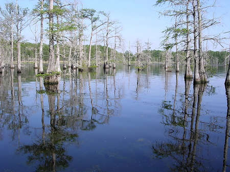bayou: Reflection of cypress tree roots in Black Bayou in spring near Mississippi, USA