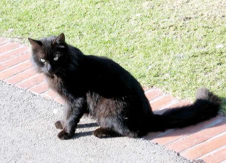 Black Cat in Ramat Gan Park, Israel