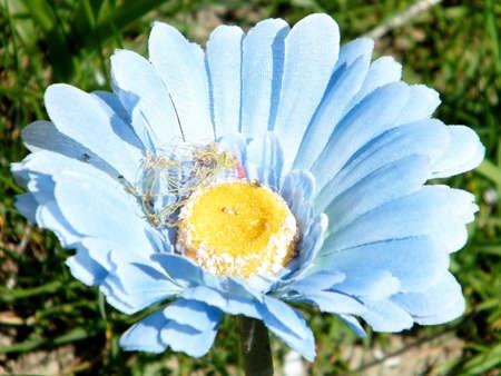 blue daisy: Decorative artificial blue daisy in Cemetery in Toronto, Canada