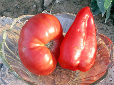 pimiento: Red tomato and bell-peper in Mayskiy, Uzbekistan