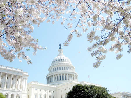 The Cherry Blossoms and Capitol Building in Washington DC, USA