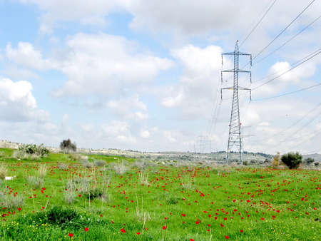 Field of red poppy in a cloudy spring day near Shoham, February 2004 Israel
