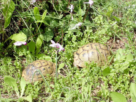 centenarian: Two turtles in Shoham forest park, February 2004 Israel Stock Photo