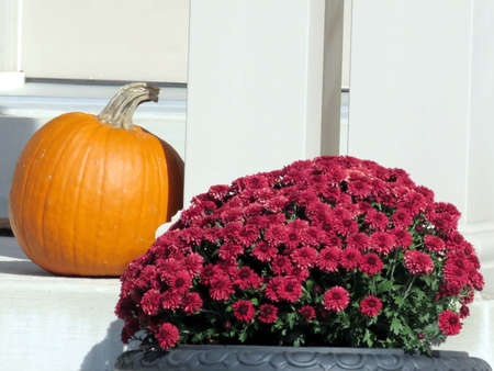 thornhill: Flowers and pumpkin in Thornhill, Canada, October 12, 2016 Stock Photo