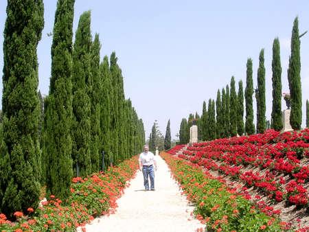 bahai: Cypress alley in Bahai garden near Akko, Israel, May 11, 2004 Editorial