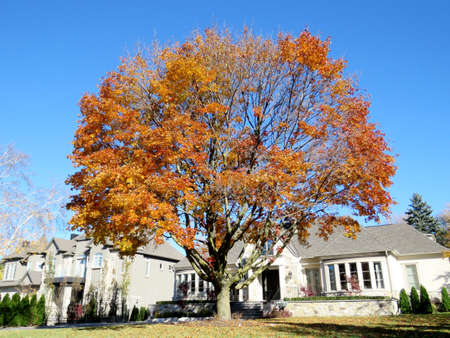 thornhill: The autumn street in Thornhill, Canada, November 6, 2016
