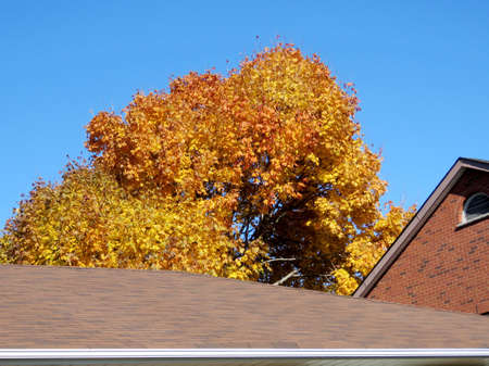 thornhill: The autumn picture in Thornhill, Canada, November 6, 2016