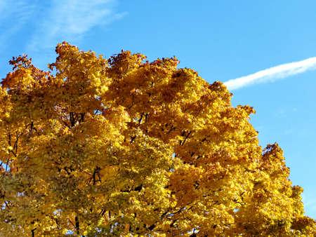 thornhill: The beautiful autumn in Thornhill, Canada, November 6, 2016