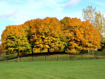 Beautiful autumn landscape in Thornhill, Canada, November 3, 2016
