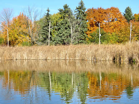 oakbank: Trees on the bank of a pond in Thornhill, Canada, November 6, 2016