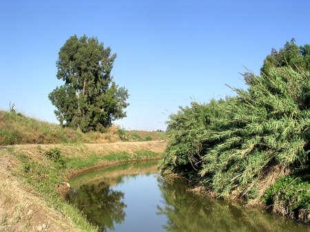 bulrush: Bulrush on Ayalon River near Or Yehuda, Israel, April 28, 2005