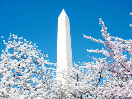 Cherry Blossoms and  Washington Monument in Washington, USA, March 31, 2010
