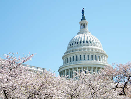 Cherry blossom in front of dome of the Capitol in Washington, USA, April 2, 2010