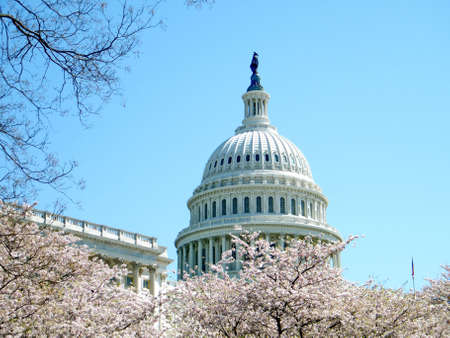 Cherry blossoms and dome of Capitol in Washington, USA, April 2, 2010