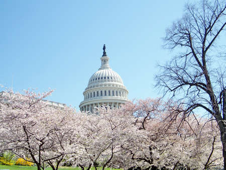 Cherry blossom in front of Capitol in Washington, USA, April 2, 2010
