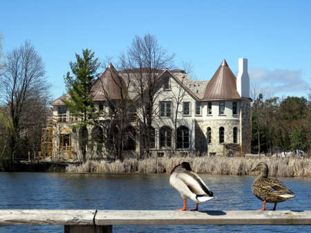 oakbank: Ducks on the bank of Oakbank Pond in Thornhill, Canada, April 17, 2017