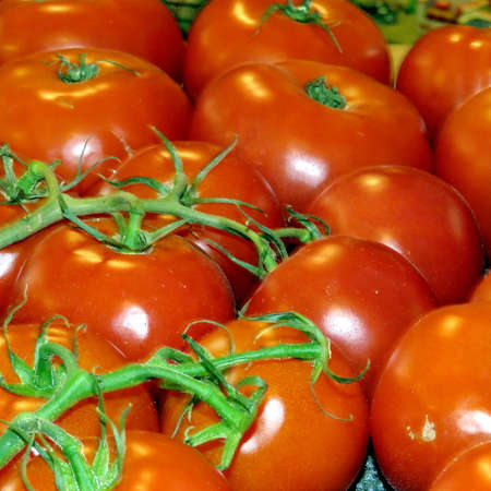 Tomatoes in Markham, Canada, June 24, 2017 Stock Photo