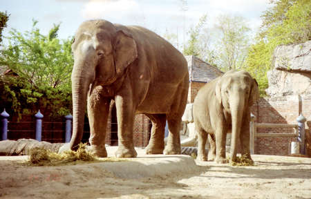 Ttwo elephants in New Orleans, USA, March 25, 2002