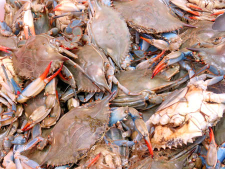 Live blue crab on market in Thornhill, Canada, May 4, 2018