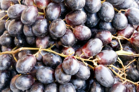 winegrowing: Brushes of ripe black grapes