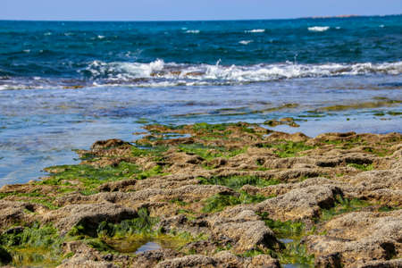 Stones and seaweed algae at low tide. Stock Photo