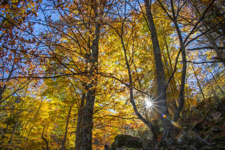The suns rays of light through the branches of trees in the autumn forest. Litochoro. Greece 写真素材 - 114344729
