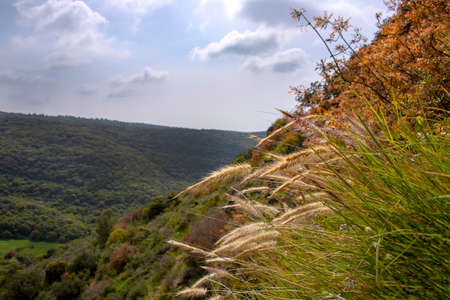 View of the hills covered with green forest under a blue sky with clouds with grass and plants in the foreground. Israel 写真素材