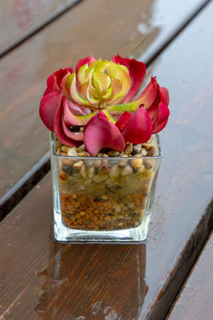 Colorful succulents with raindrops in a glass pot on a wet wooden table close up