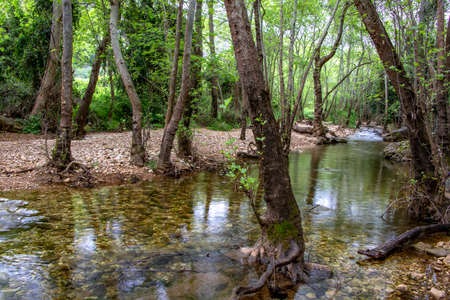 River flowing between stones and trees in green foliage. Landscape 写真素材