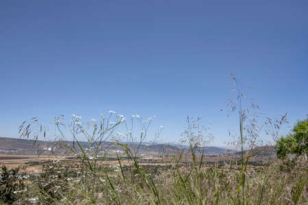 View of the mountains of Galilee through the flowers and grass. Landscape 写真素材